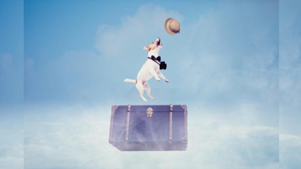 ゴールデンウィークに、旅行に行って楽しと妄想する犬。