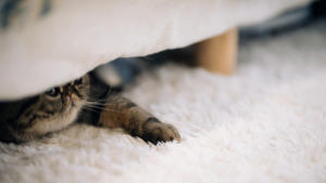 cat-under-the-bed