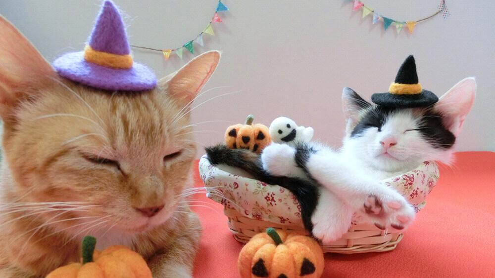 two cats enjoying helloween